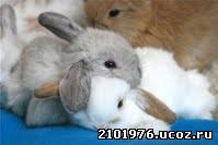 кролик совместимость
